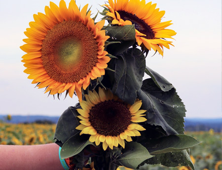 U-Pick Sunflower Bouquet