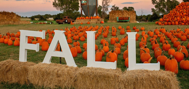 Pumpkins - Gourds - Fall Decor - Texas