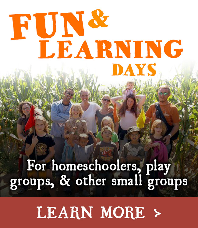 Fun & Learning Days for Small Groups