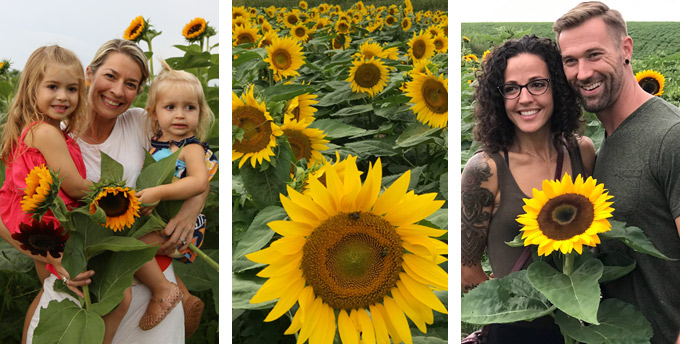 Sunflower Fields - Fields of Sunflowers - Photo Ops TX